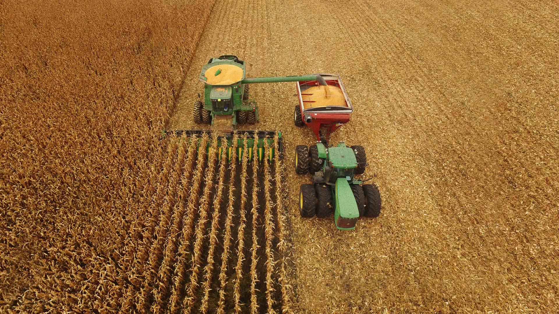 Corn Grain Fill, Maturity and Drydown